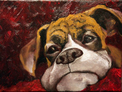 Red Dog   SOLD
