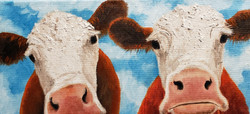 Curious Cows   SOLD