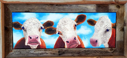 3 Curious Cows    SOLD