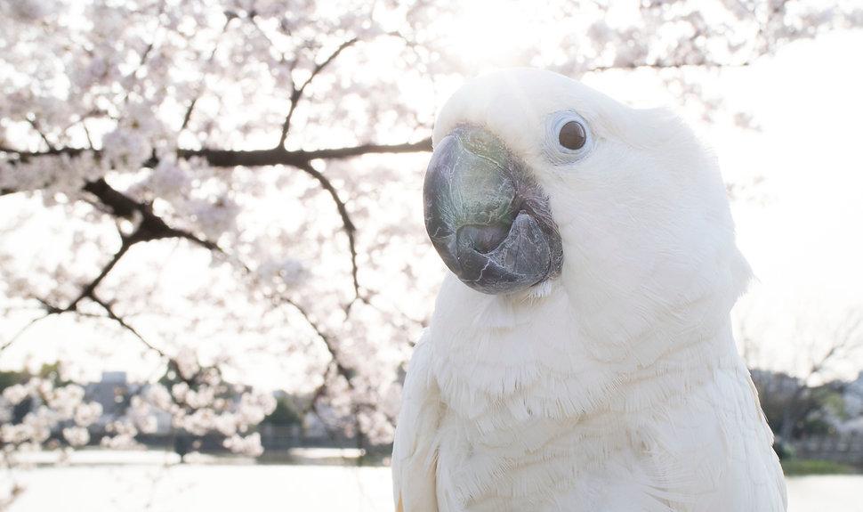 みやたかつみち 宮田勝通写真事務所
