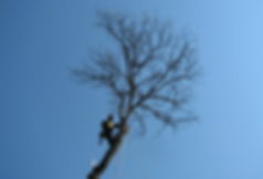 Tree pruning forster tuncurry