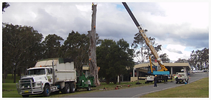 Taree Tree Removal, Forster Tree Removal