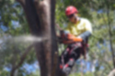 Tree safety and insurance