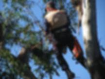 tree lopping taree