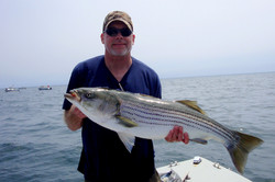 Cape Star Charters - Striped Bass