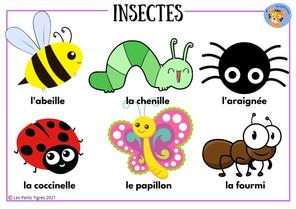 insectes vocab.jpg