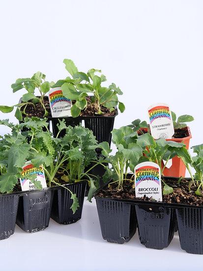 3 month subscription 'Plant it' Box