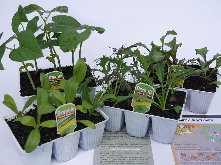 'Plant it' Box