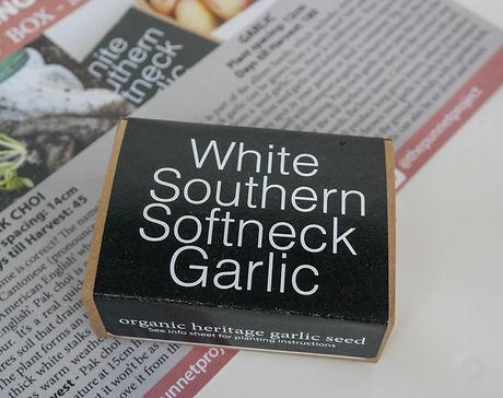 White southern Softneck Garlic