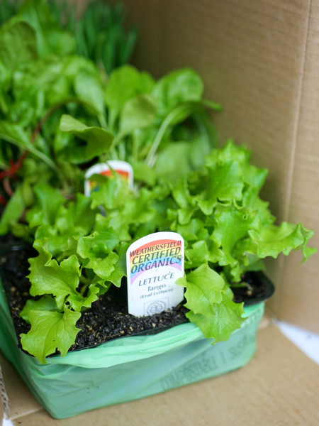 Plant it - Box