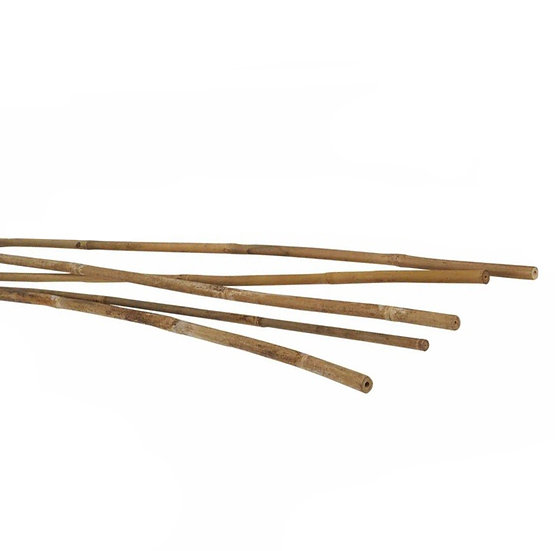 Natural bamboo Cane stakes - 5 pack