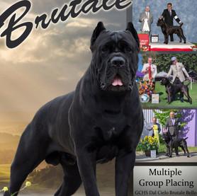 Brutale2019Final_edited.jpg