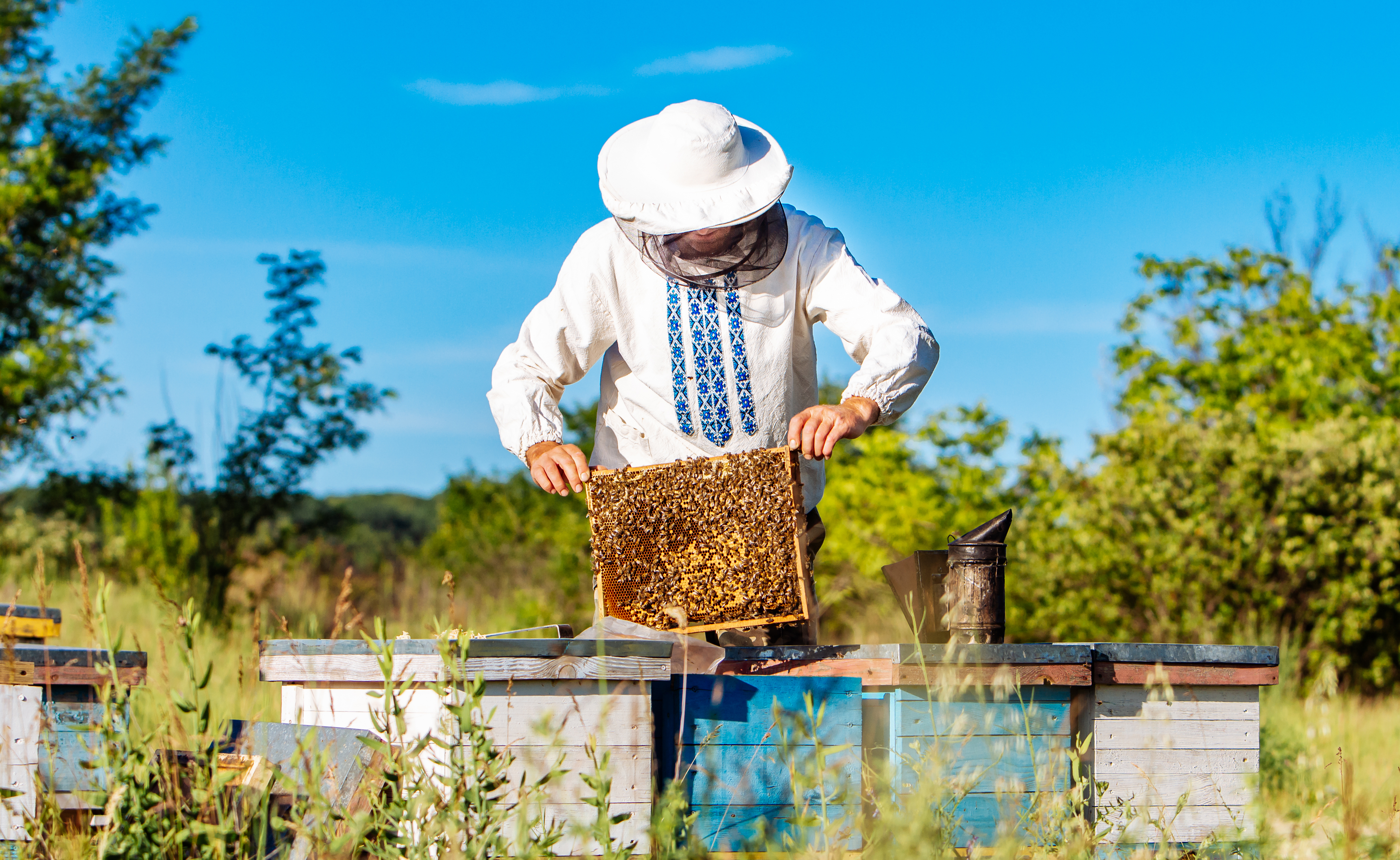 Young beekeeper working in the apiary