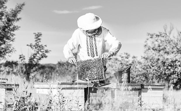 Young%20beekeeper%20working%20in%20the%2