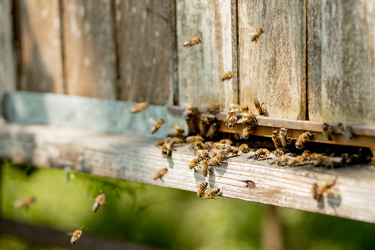 A close-up view of the working bees brin