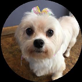 cute puppy_3.png