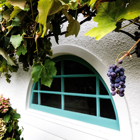 grape-shot.jpg