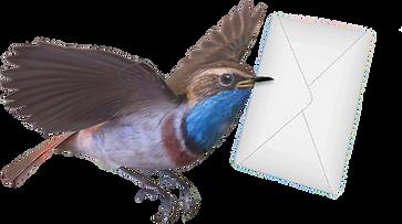 blauwborstmetbrief.png