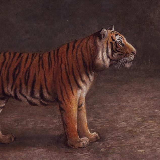 Mowgli and the tiger