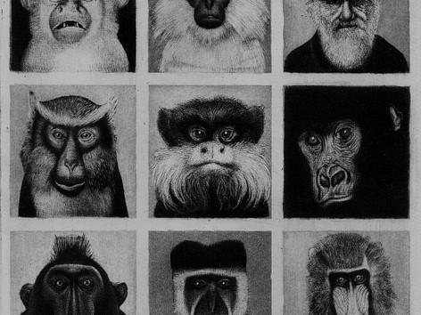 Diverse Primates
