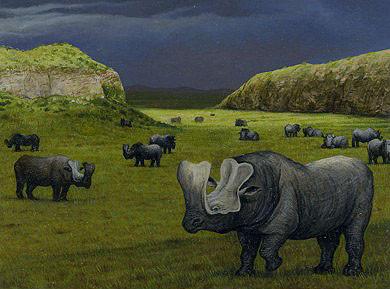Rhinoceri II