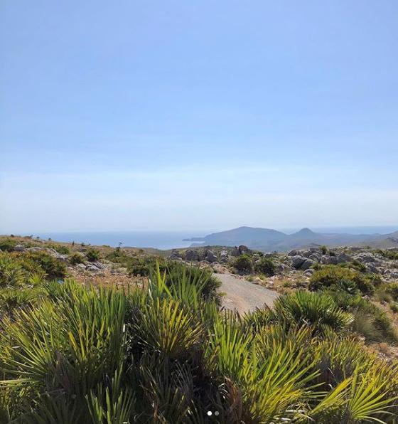 En Antic Mallorca recogemos el palmito como se ha hecho desde hace siglos en la isla. Seguimos la tradición y contribuimos a mantener esta artesanía en Mallorca.