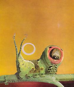 caterpillar eclipse