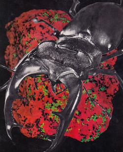 space rock beetle
