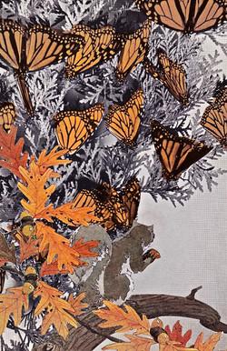 squirrel monarch
