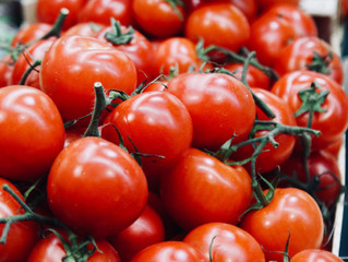 Gaspacho de tomates et burrata