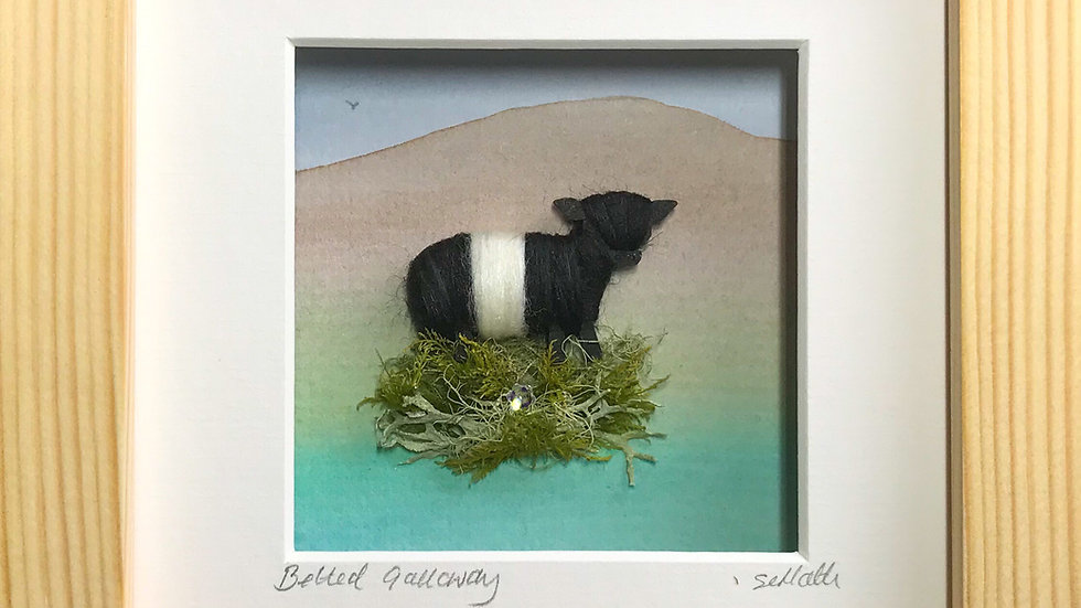Small Boxed Picture Belted Galloway