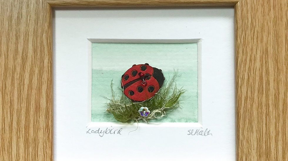 Ladybird Mini Boxed Picture