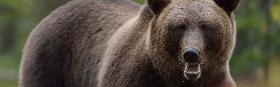 bear-header_0.jpg