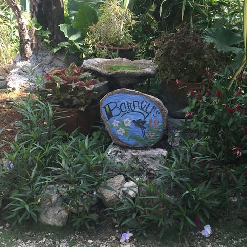 Barney´s Humming Bird Garden