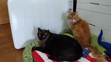 להזדקן בכבוד - המדריך לטיפול בחתול המבוגר