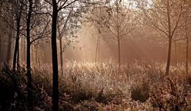 Glade in Autumn-001.JPG