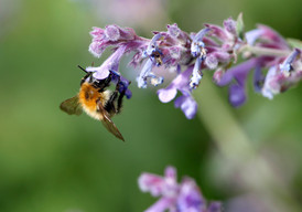 Bees-6-6-2020-008b.JPG
