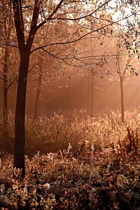 Glade in Autumn-002.JPG