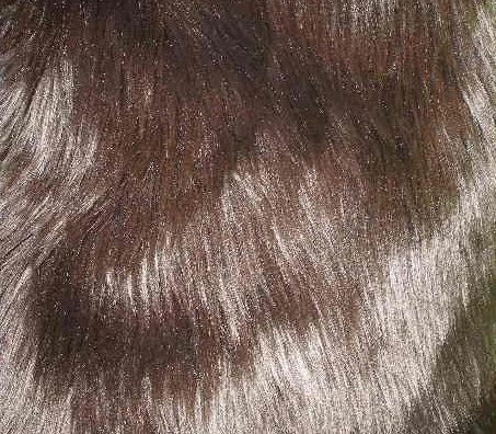 Dark Brown Fur