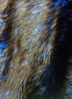 Black-Tipped Foxy Electric Blue