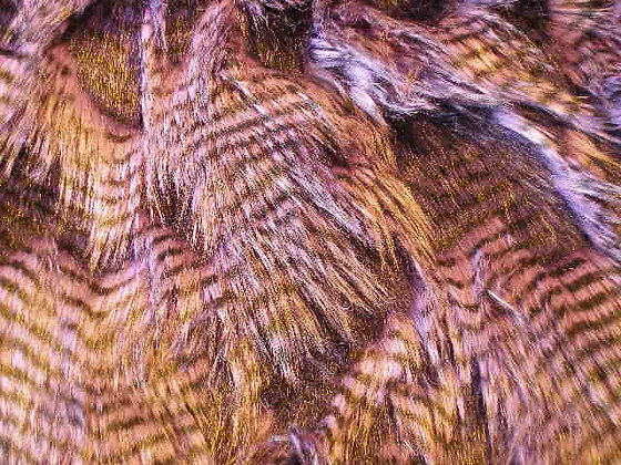 Long Purple Owl Fur