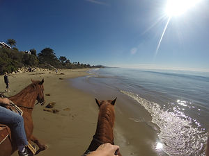 horses on thebeach santa barbara