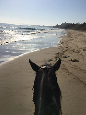 horseback riding on the beach santa barbara
