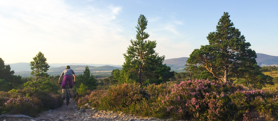 Mountain Bikers awareness of Capercaillie in the Cairngorms National Park