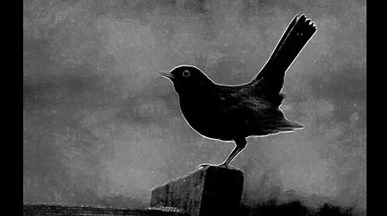 A blackbird singing followed by a synthesizer singing