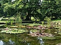 Jakarta Tourist Attractions : Bogor Botanical Gardens ( LSI CITY TOURS JAKARTA).