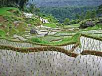 OUTSIDE JAKARTA Places to Visit :  West Java Villages (LSI TOURS).