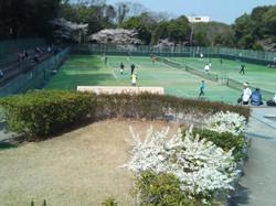2019団体戦 0407明石公園03 撮影:明石市テニス協会