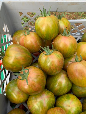 Tomat Cassio