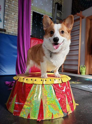 #circusdog